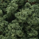 WFC1636 Woodland Scenics: Underbrush - Medium Green (50 cu. in. Shaker)
